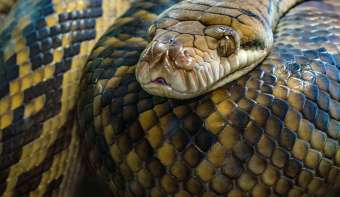 Read more about World Snake Day