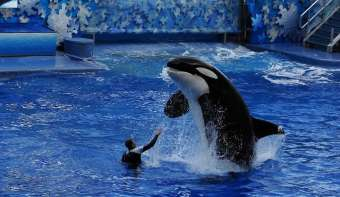 National Shamu the Whale Day