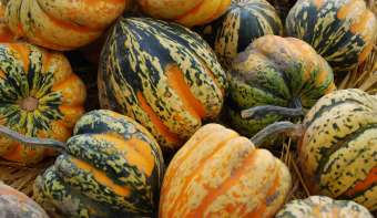 Read more about National Acorn Squash Day