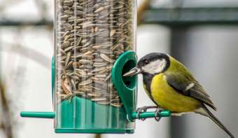 Read more about Feed the Birds Day
