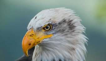 Read more about American Eagle Day