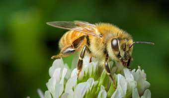 Read more about World Bee Day