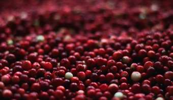 Read more about National Eat a Cranberry Day