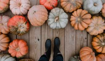 Read more about National Pumpkin Day