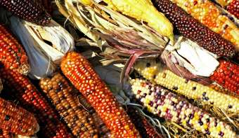 Read more about Maize Day