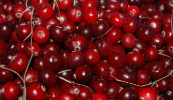 Read more about National Cranberry Relish Day