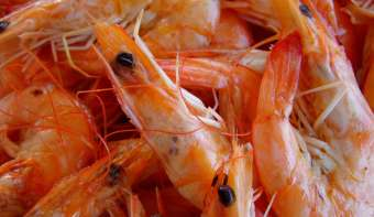 Read more about National Shrimp Scampi Day