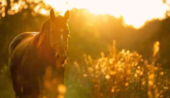 Read more about National Horse Protection Day