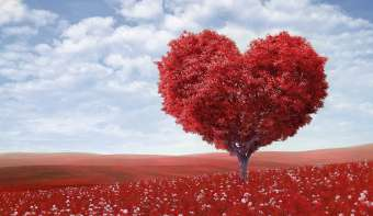 Read more about National Love a Tree Day