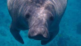 Read more about Manatee Appreciation Day