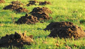 Read more about National Mole Day