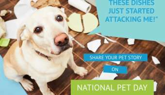 Read more about National Pet Day