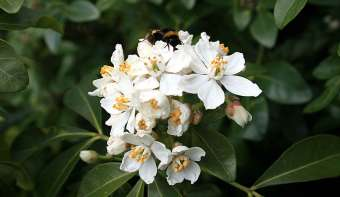 Read more about National Orange Blossom Day