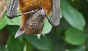 National Bat Appreciation Day