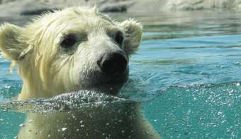 Read more about National Polar Bear Day