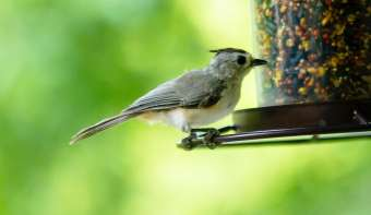 Read more about National Bird-Feeding Month