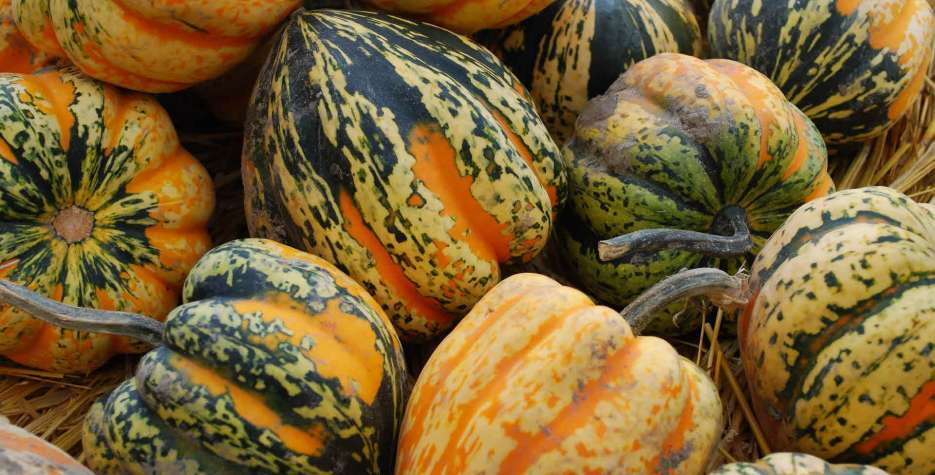 National Acorn Squash Day in USA in 2021