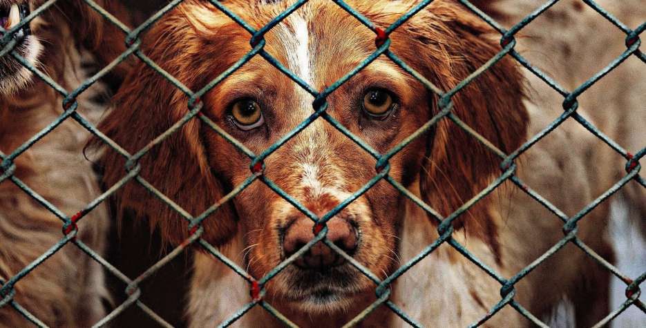 National Adopt a Shelter Pet Day in USA in 2021