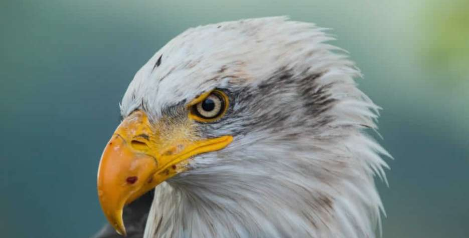 American Eagle Day in USA in 2021