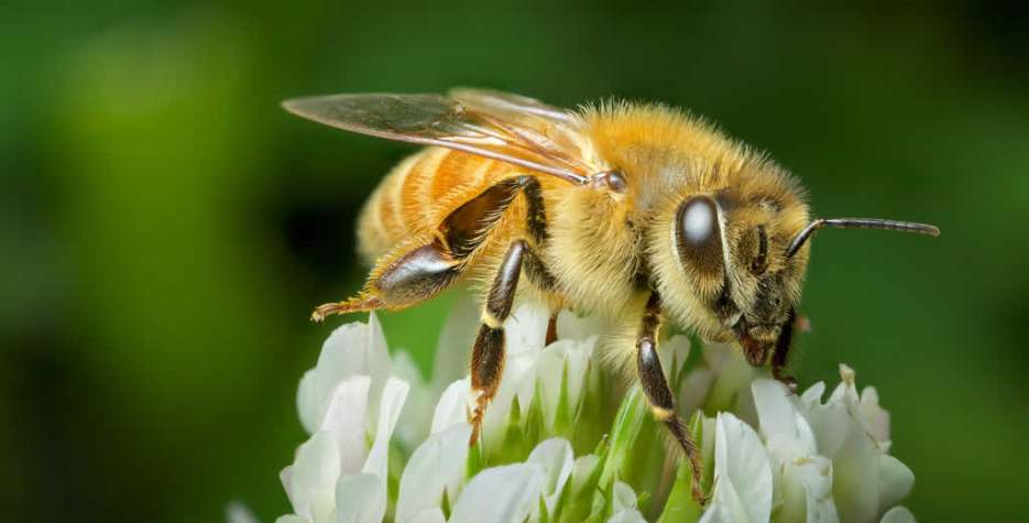 National Honey Bee Day in USA in 2021