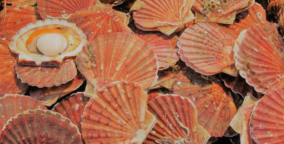 National Coquilles Saint Jacques Day in USA in 2021