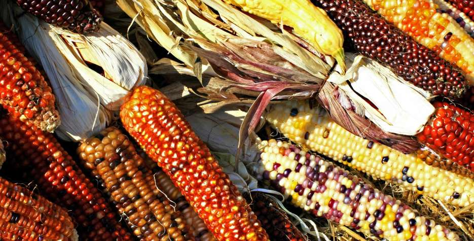 Find out the dates, history and traditions of Maize Day