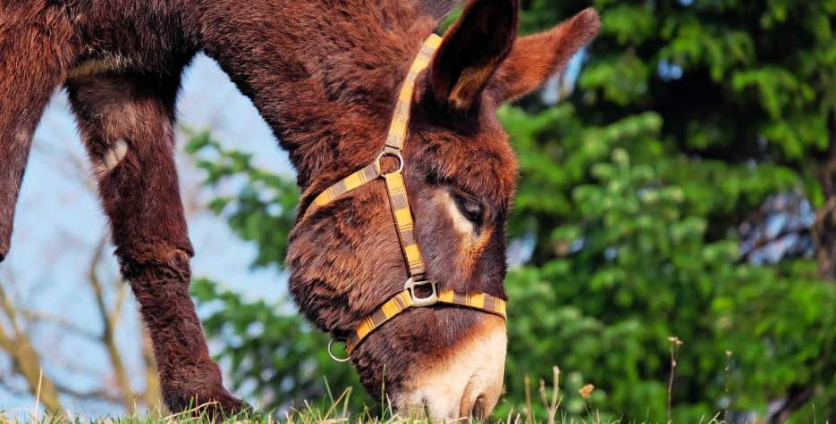 National Mule Day in USA in 2020