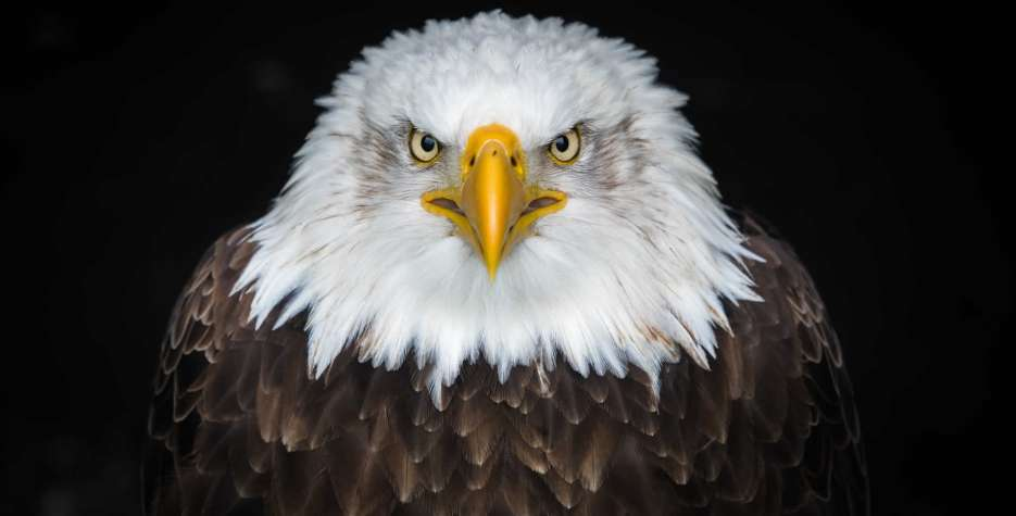 National Save The Eagles Day in USA in 2021