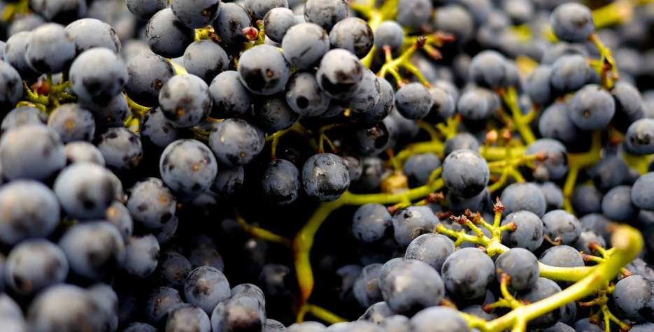 Pinot Noir Day in United Kingdom in 2021
