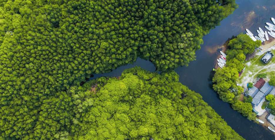 International Day for the Conservation of the Mangrove Ecosystem in United Nations in 2021
