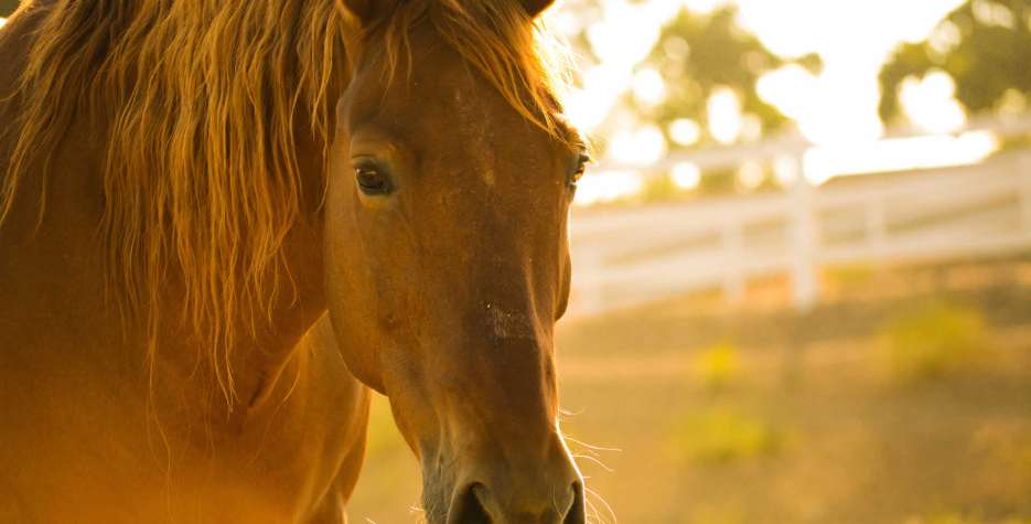 National Help a Horse Day in USA in 2021