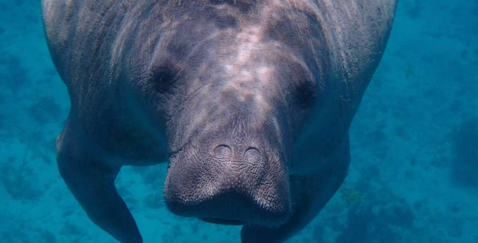 Manatee Appreciation Day in USA in 2021