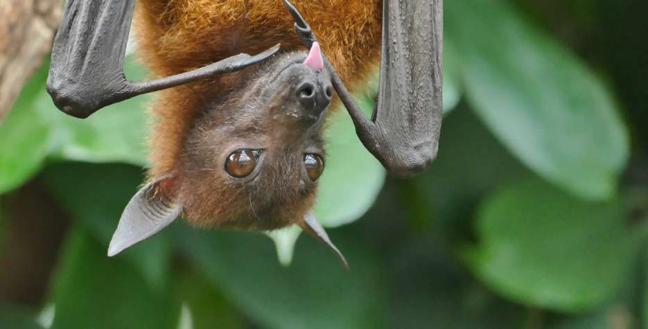 National Bat Appreciation Day in USA in 2021