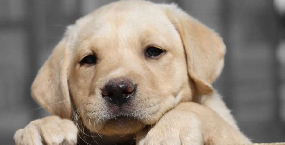 National Puppy Day in USA in 2021