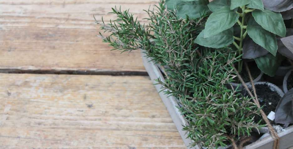 More Herbs, Less Salt Day in USA in 2021