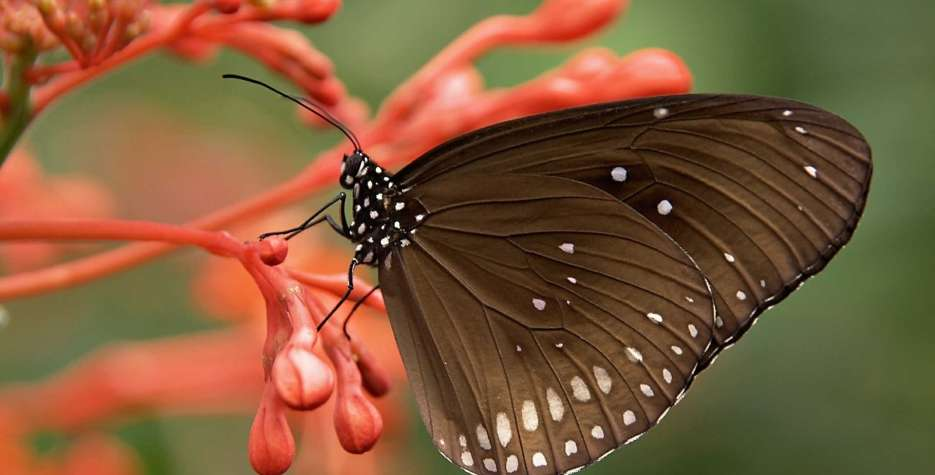 National Learn About Butterflies Day in USA in 2021